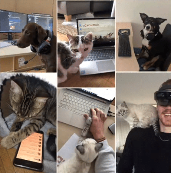 Tiere im HomeOffice